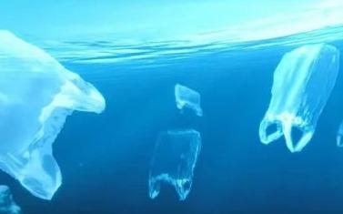 陳根:從海洋到海歸,塑料污染威脅逼近